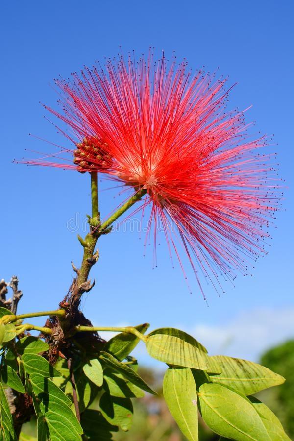 ¿Puede una flor silvestre ser terrorífica?